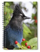 Steller's Jay And Red Berries Spiral Notebook