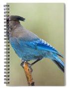 Stellers Jay Spiral Notebook