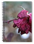 Stem Dried Petals Spiral Notebook