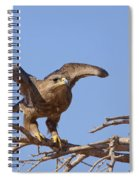 Steppe Eagle Aquila Nipalensis 1 Spiral Notebook