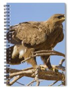 Steppe Eagle Aquila Nipalensis 2 Spiral Notebook