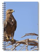 Steppe Eagle Aquila Nipalensis Spiral Notebook