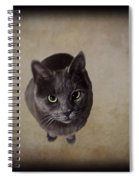 Sterling The Cat Spiral Notebook