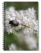 Stiff Dogwood Wildflowers And Beetle Spiral Notebook
