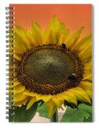 Still Busy At Sunset Spiral Notebook
