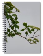 Still Water Reflection Spiral Notebook