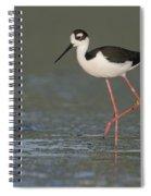 Stilt In Duckweed Spiral Notebook