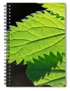Stingers Spiral Notebook