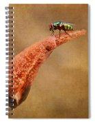 Stinkhorn Mushroom - Fly Spiral Notebook
