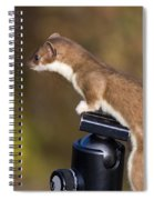 Stoat On Tripod Spiral Notebook