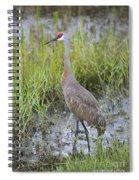 Stoic Sandhill Spiral Notebook