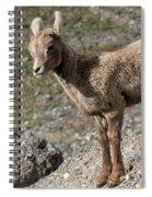 Stone Lamb Spiral Notebook