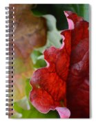 Stop Lit Spiral Notebook