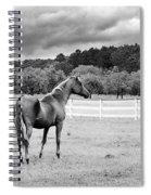 Stormy Pasture Spiral Notebook