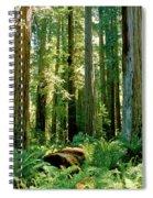 Stout Grove Coastal Redwoods Spiral Notebook