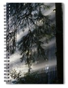 Stout Grove Redwoods With Sunrays Breaking Through Fog Spiral Notebook