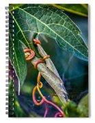 Strangler Spiral Notebook
