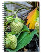 Strawberries - Soon To Be Picked Spiral Notebook