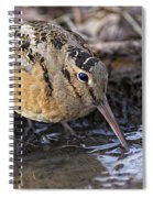 Streamside Woodcock Spiral Notebook