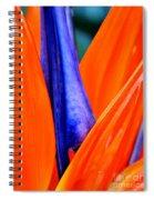 Strelitzia Colour Spiral Notebook