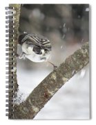 Stretched Spiral Notebook