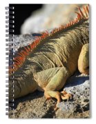 Stretched Out Spiral Notebook