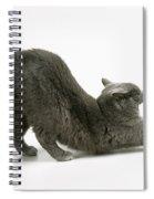 Stretching Cat Spiral Notebook