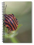 Striped Bug Spiral Notebook