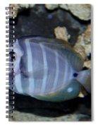 Striped Fish Spiral Notebook