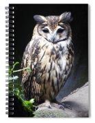 Striped Owl Spiral Notebook