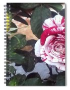 Striped Rose And Yellow Spiral Notebook