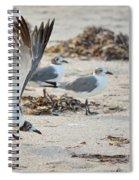Strutting Seagull On The Beach Spiral Notebook