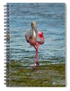 Strutting Spoonbill Spiral Notebook
