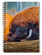 Stuck On Spiral Notebook