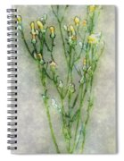 Nature Study In Moonlight Spiral Notebook