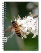 Study Of A Bee Spiral Notebook