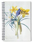 Study Of Four Species Of Crocus Spiral Notebook