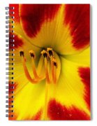 Stunning Daylily  Spiral Notebook