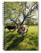 Stunning Texas Longhorns Spiral Notebook