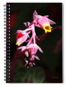 Succulent 1 Spiral Notebook