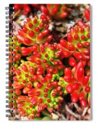 Succulent 3 Spiral Notebook