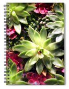 Succulent Beauties Spiral Notebook