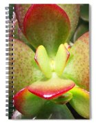 Succulent Plant Upclose Spiral Notebook