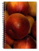 Succulent Sunshine Spiral Notebook