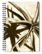 Succulent Under The Scorching Desert Sun Spiral Notebook