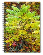 Sumac Leaves In The Fall Spiral Notebook