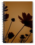 Summer Evening Cosmos  Spiral Notebook