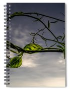 Summer Green Spiral Notebook