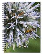 Summer Hue Spiral Notebook