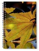 Summer Japanese Maple - 1 Spiral Notebook